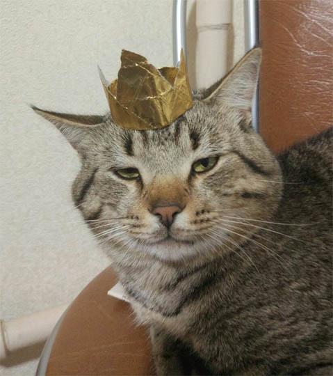 Картинки и фото интересных и необычных котов - смешные и веселые 12