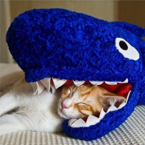 Картинки и фото интересных и необычных котов - смешные и веселые 14
