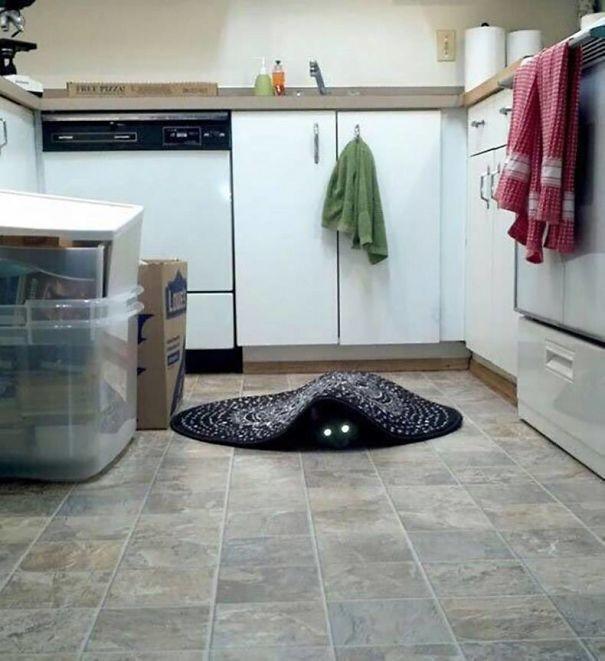 Картинки и фото интересных и необычных котов - смешные и веселые 2