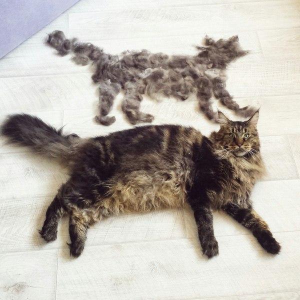 Картинки и фото интересных и необычных котов - смешные и веселые 9