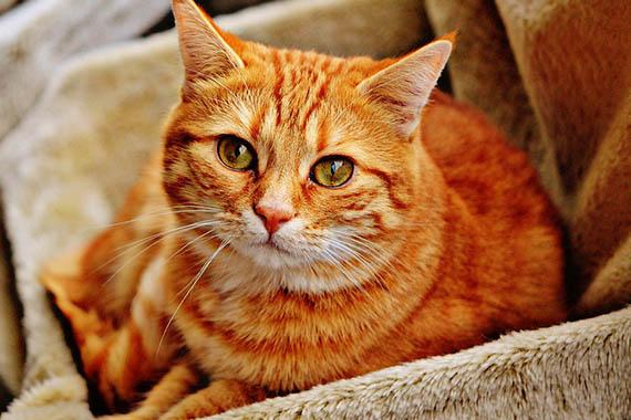 Красивые картинки кошек и котов - скачать, смотреть бесплатно 1