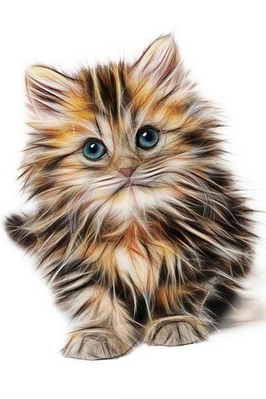Красивые картинки кошек и котов - скачать, смотреть бесплатно 10