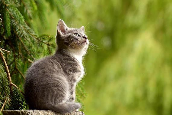 Красивые картинки кошек и котов - скачать, смотреть бесплатно 12