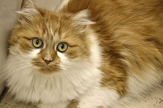 Красивые картинки кошек и котов - скачать, смотреть бесплатно 15