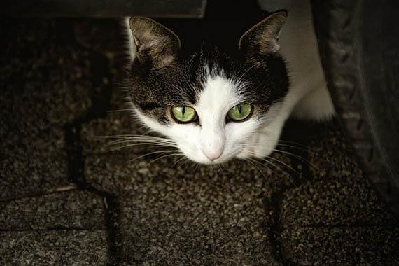 Красивые картинки кошек и котов - скачать, смотреть бесплатно 2
