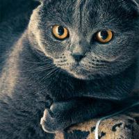 Красивые картинки кошек и котов - скачать, смотреть бесплатно 6