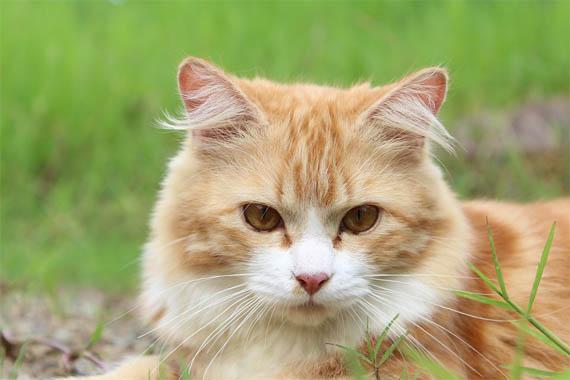 Красивые картинки кошек и котов - скачать, смотреть бесплатно 7