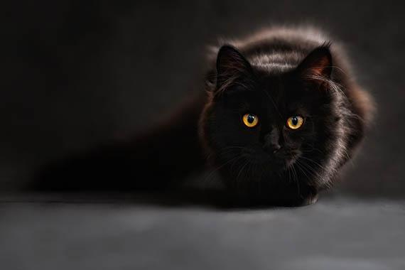 Красивые картинки кошек и котов - скачать, смотреть бесплатно 9