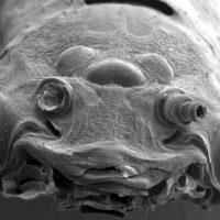 Микробы под микроскопом для детей - картинки и фото не для слабонервных 10