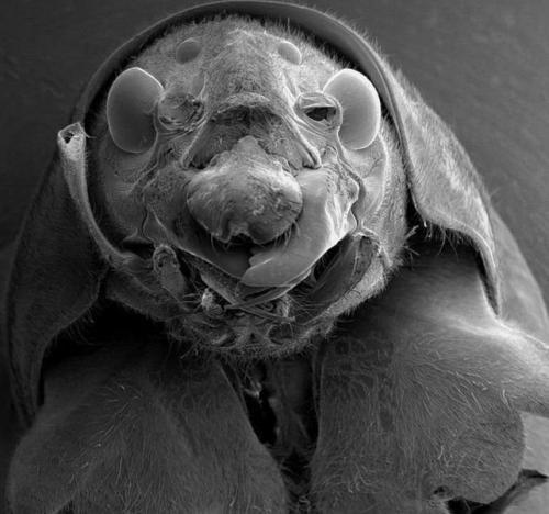 Микробы под микроскопом для детей - картинки и фото не для слабонервных 4