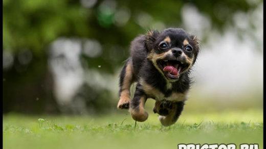 Почему собаки лают без причины или на чужих - основные причины 2