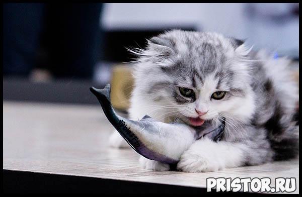 Правильное питание для кошек - основной рацион и главные секреты 3