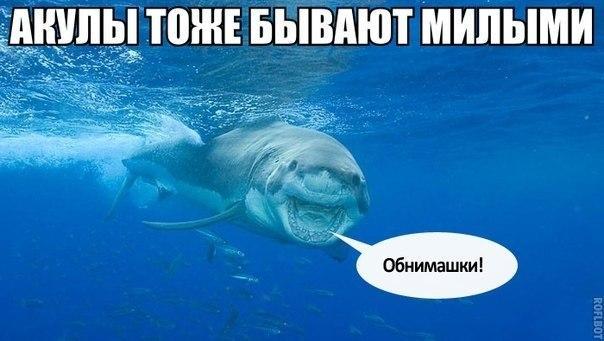 Смешные картинки с надписями про животных - веселые и прикольные 6