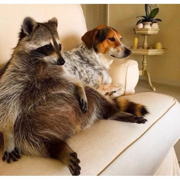 Выходные у животных - смешные и прикольные фотографии, картинки 11