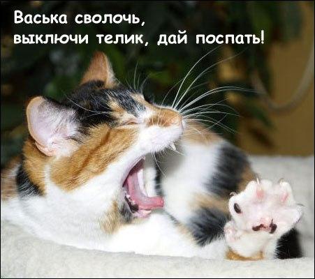 Выходные у животных - смешные и прикольные фотографии, картинки 9