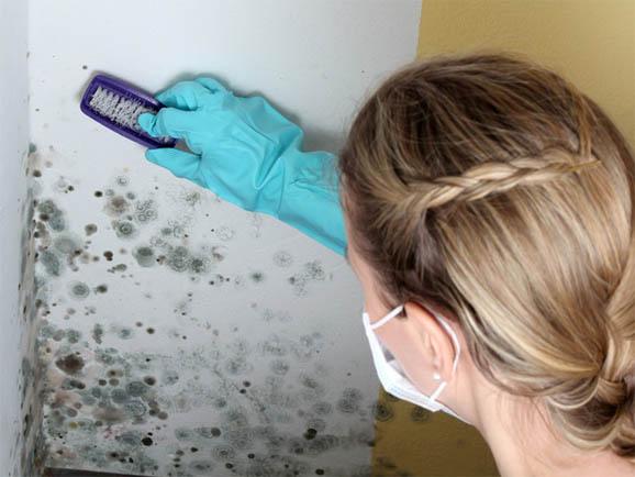 Как избавиться от грибка на стенах в домашних условиях - лучшие способы 2