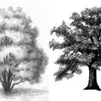 Как рисовать деревья карандашом поэтапно - хвойные и лиственные 1
