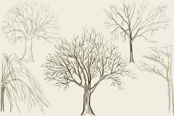 Как рисовать деревья карандашом поэтапно - хвойные и лиственные 2