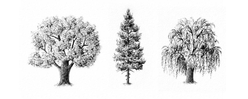 Как рисовать деревья карандашом поэтапно - хвойные и лиственные 4