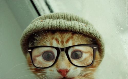 Картинки на аву кошки и котики - самые прикольные и красивые 15