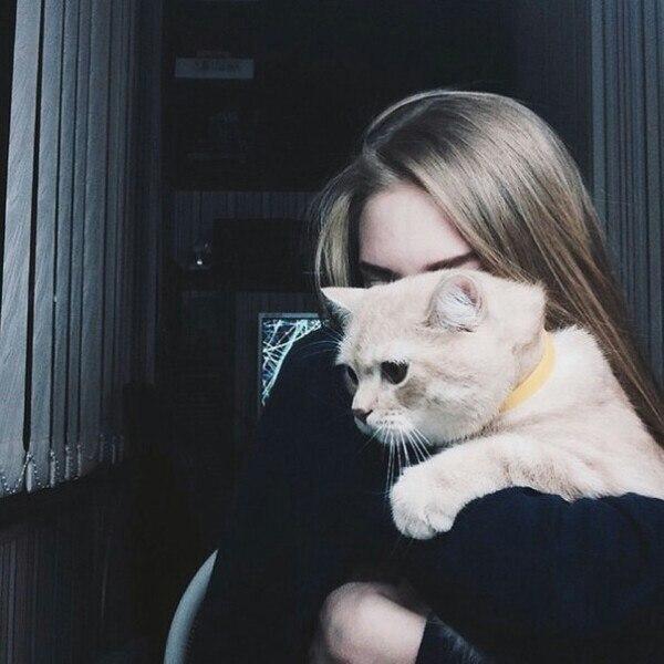 Картинки на аву кошки и котики - самые прикольные и красивые 2