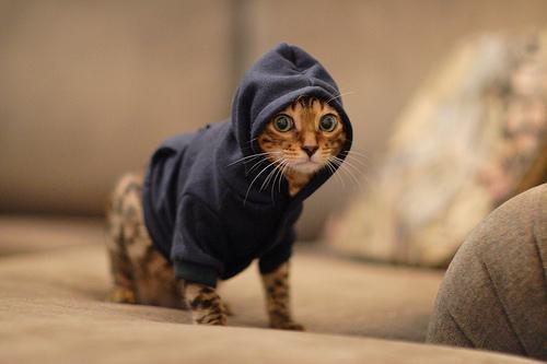 Картинки на аву кошки и котики - самые прикольные и красивые 3