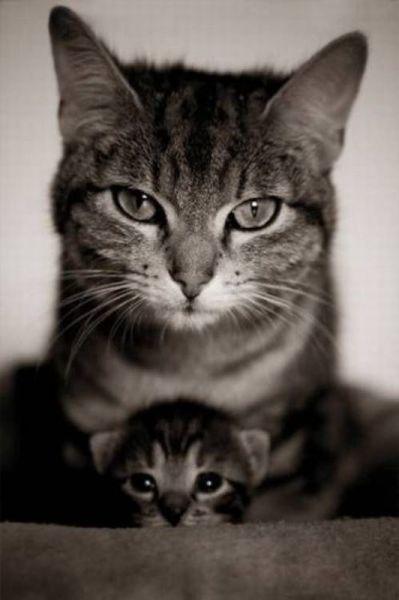 Картинки на аву кошки и котики - самые прикольные и красивые 4