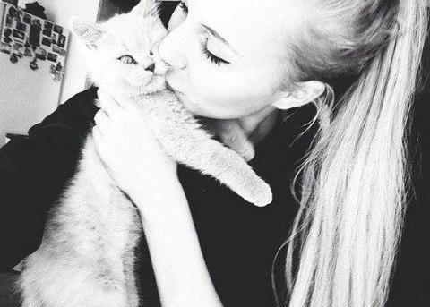 Картинки на аву кошки и котики - самые прикольные и красивые 5