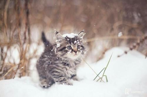 Картинки на аву кошки и котики - самые прикольные и красивые 7
