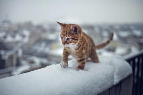 Красивые фото на аву в Одноклассники - скачать, смотреть бесплатно 6