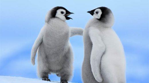 Приколы про пингвинов - смешные и веселые картинки, фото 18