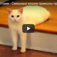 Смешные видео приколы про котов и кошек - смотреть бесплатно