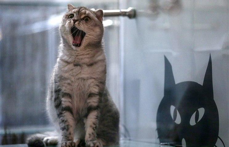 Смешные фото приколы про котов и кошек - смотреть бесплатно, 2017 1