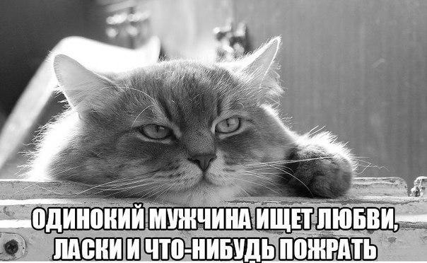 Смешные фото приколы про котов и кошек - смотреть бесплатно, 2017 10