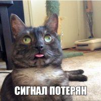 Смешные фото приколы про котов и кошек - смотреть бесплатно, 2017 12