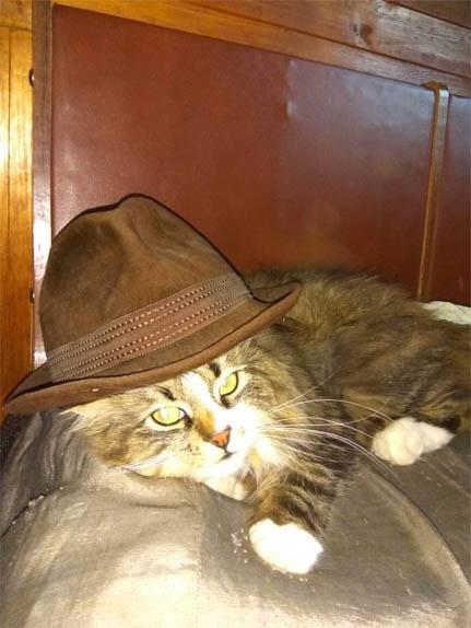 Смешные фото приколы про котов и кошек - смотреть бесплатно, 2017 5