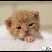 Как узнать возраст котенка - несколько полезных советов и методов 3