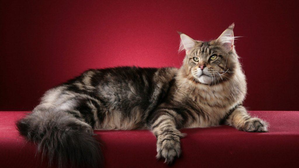 Милые и красивые фото животных на рабочий стол - подборка №2 1