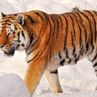 Редкие и исчезающие животные Беларуси - интересные виды 4