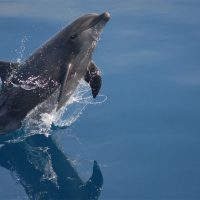 Редкие и исчезающие животные Крыма - интересные и необычные виды 2