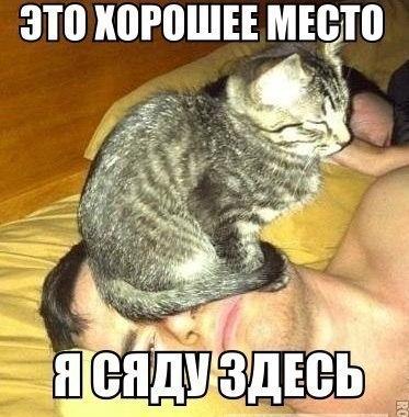 Самые смешные фото приколы про животных - с надписями, подборка №8 9