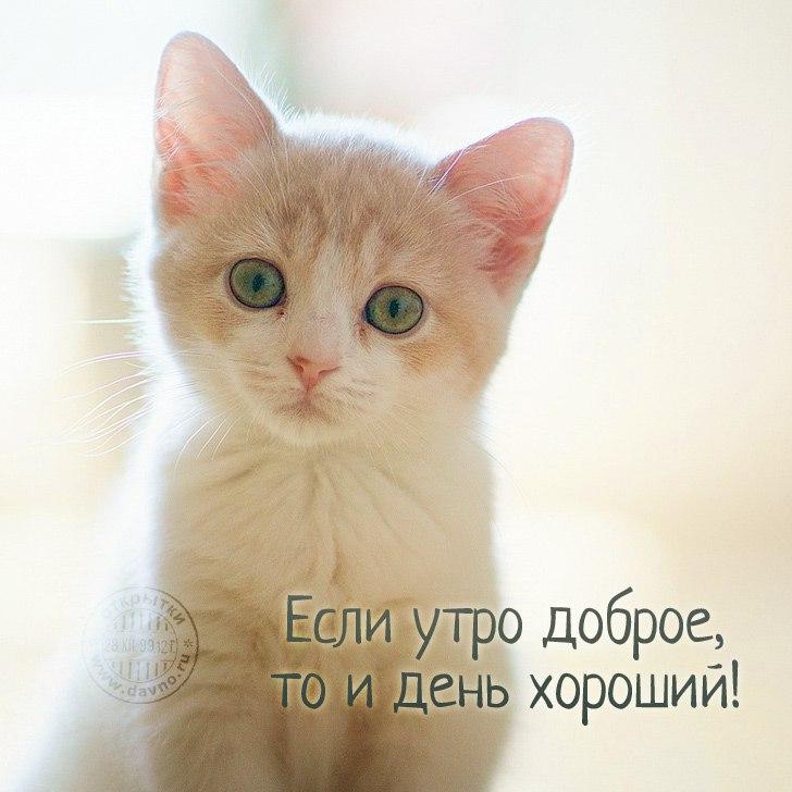 Для дед, картинки котов с добрым утром