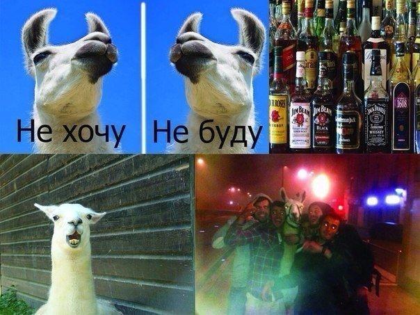 Смешные будние приколы про алкоголь - самые новые и свежие №9 12