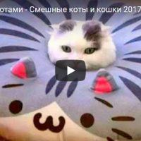 Смешные и ржачные приколы с котами - видео до слез, подборка №26