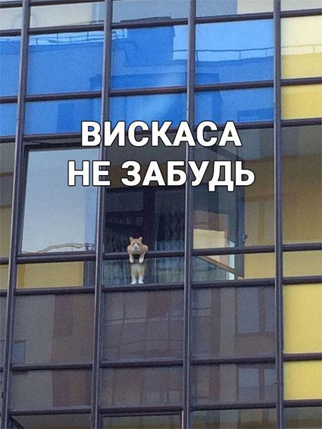 Чисто русские фото - самые смешные и прикольные, подборка 13