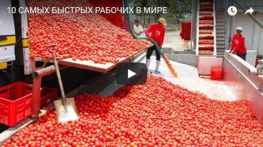 10 самых быстрых и невероятных рабочих во всем мире - видео
