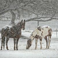 Зимние картинки на телефон - красивые, прикольные и интересные 10