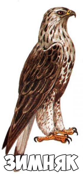Зимующие птицы картинки для детей - самые интересные и красивые 1