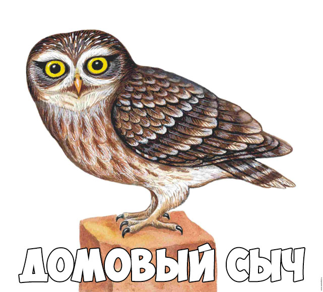 Зимующие птицы картинки для детей - самые интересные и красивые 16