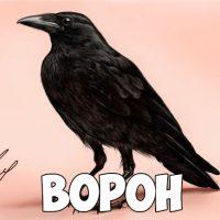 Зимующие птицы картинки для детей - самые интересные и красивые 19